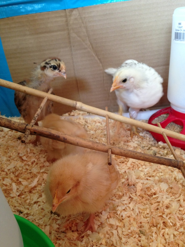 Our little flock.